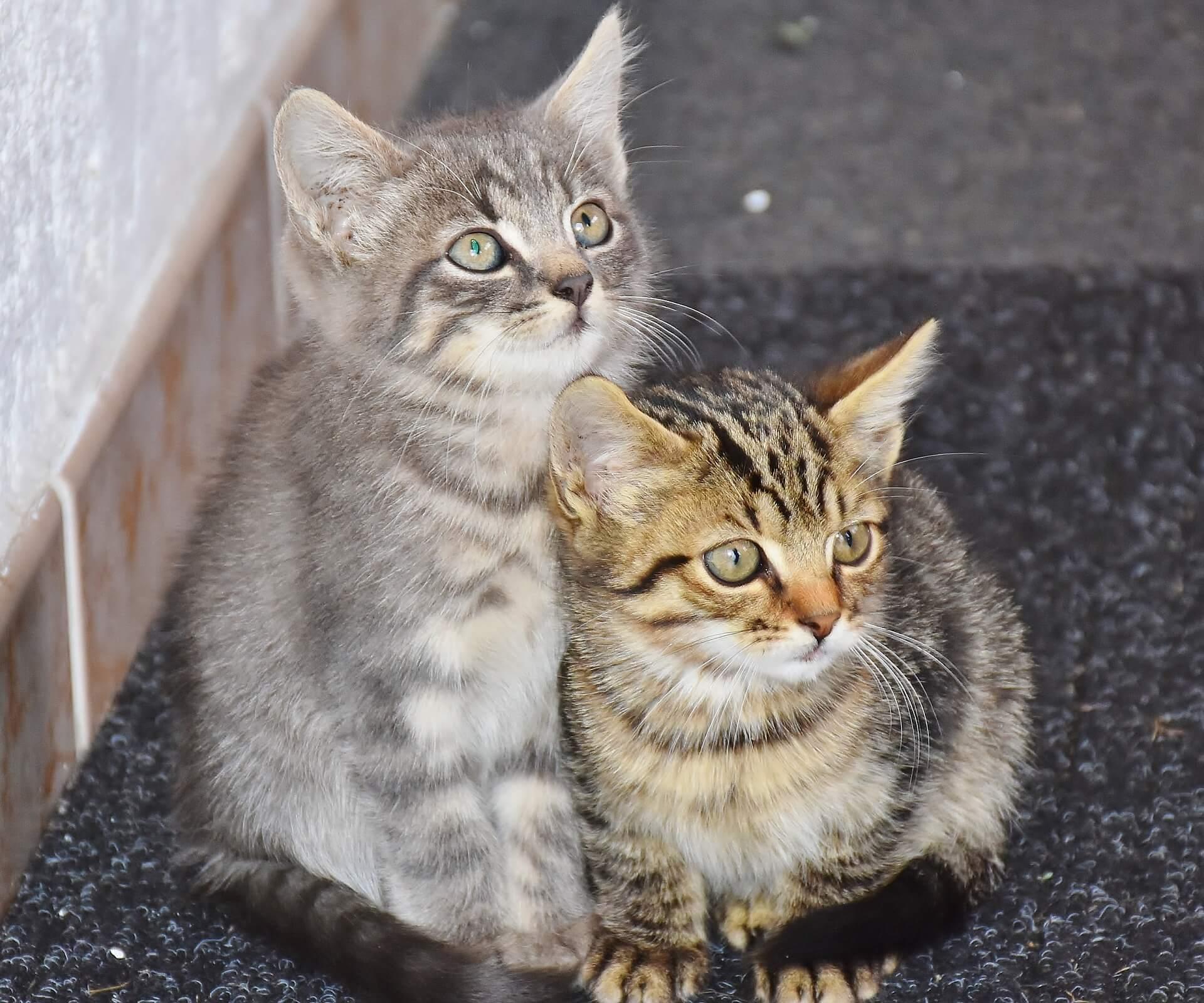 Adoptie op afstand