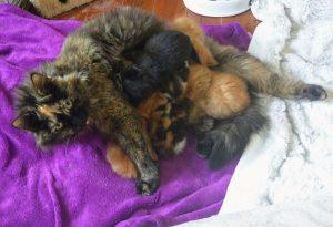Beter laat dan vroeg – wanneer kunnen kittens van de moeder gescheiden worden?