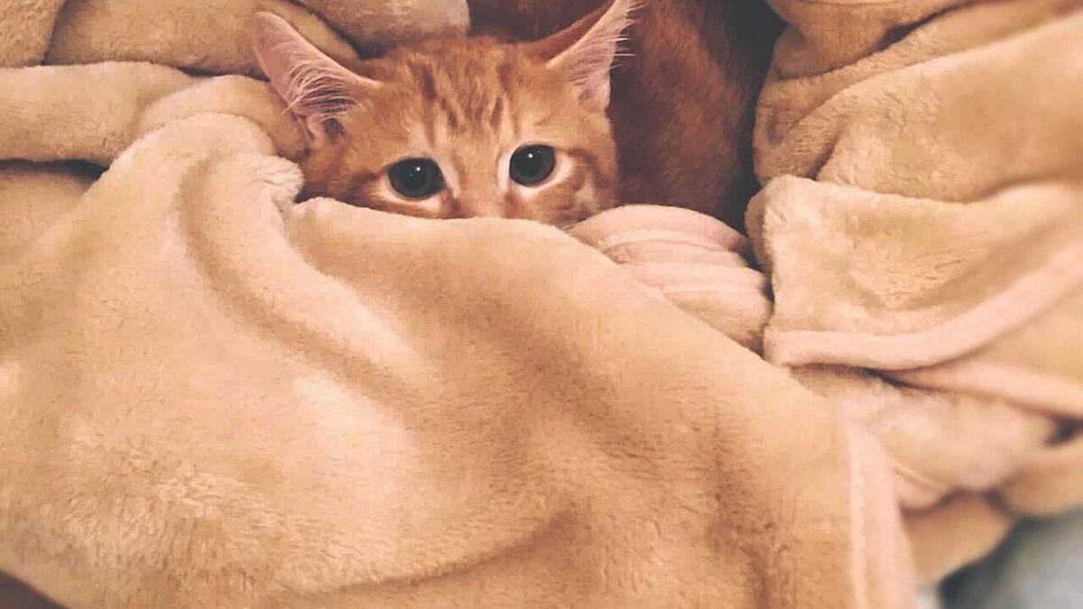 Hoe Verzorg Je Kittens Kat Zoekt Thuis