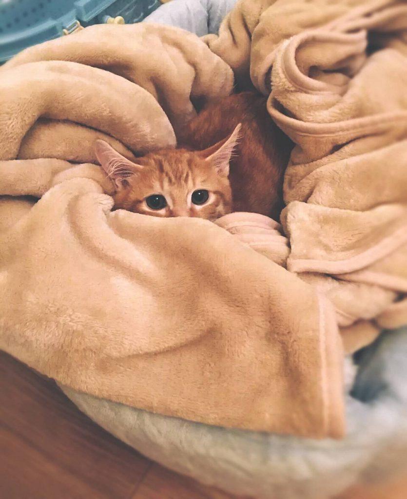 Geliefde Hoe verzorg je kittens?   Kat zoekt thuis YK62